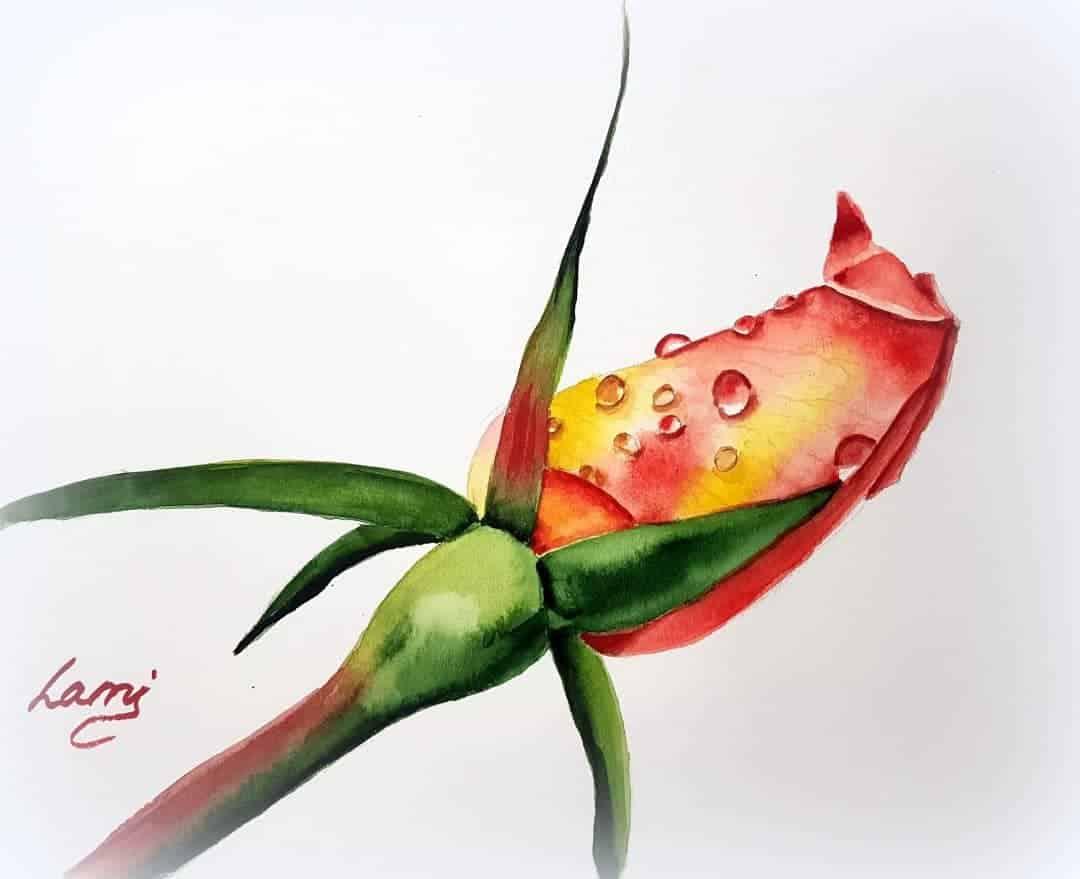 Akvarell rózsa