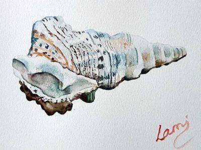 Akvarell tanfolyam – Kagyló festése