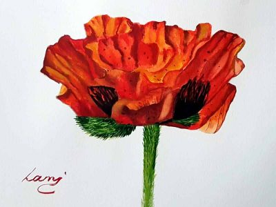 Akvarell tanfolyam – Pipacs festése
