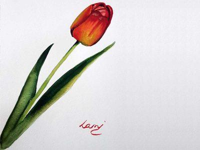 Akvarell tanfolyam – Piros tulipán festése