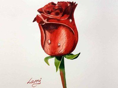 Akvarell tanfolyam – Vörös rózsa festése