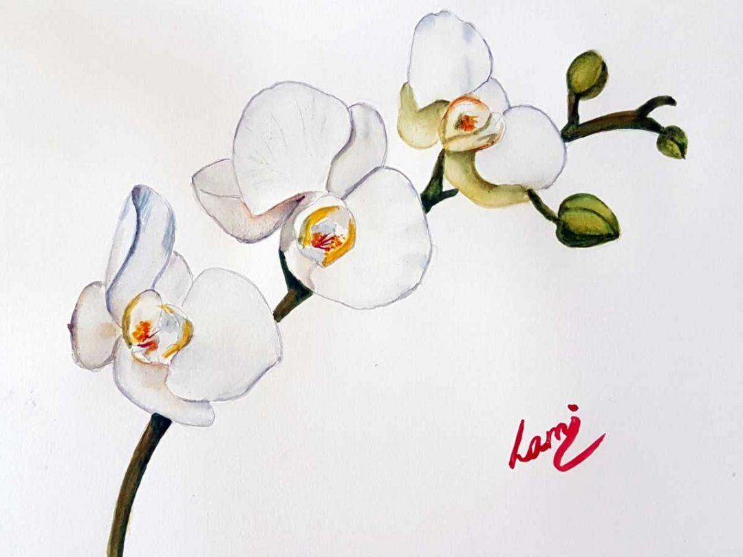 Hogyan fess meg egy orchideát?